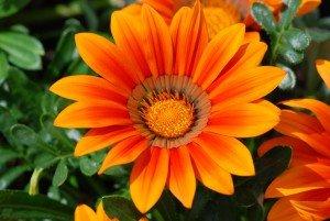 afbeelding oranje bloem